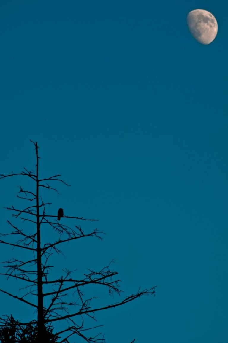 0004 bird and moon